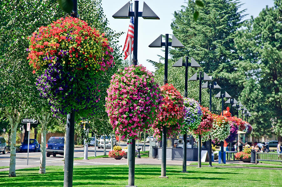 Flower Tower Hanging Baskets : Hanging flower baskets in a park by lee serenethos