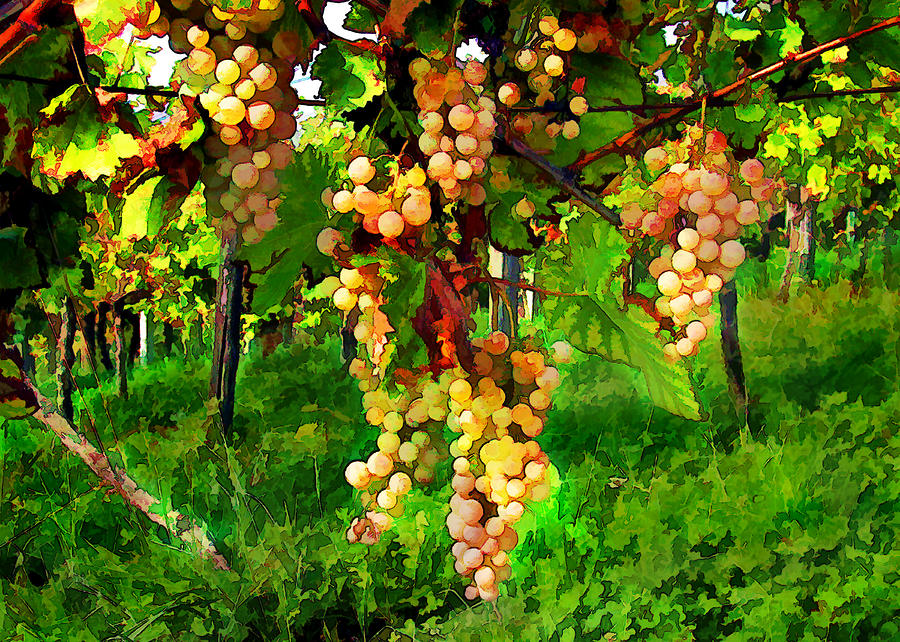 Hanging Grapes On The Vine Painting  - Hanging Grapes On The Vine Fine Art Print