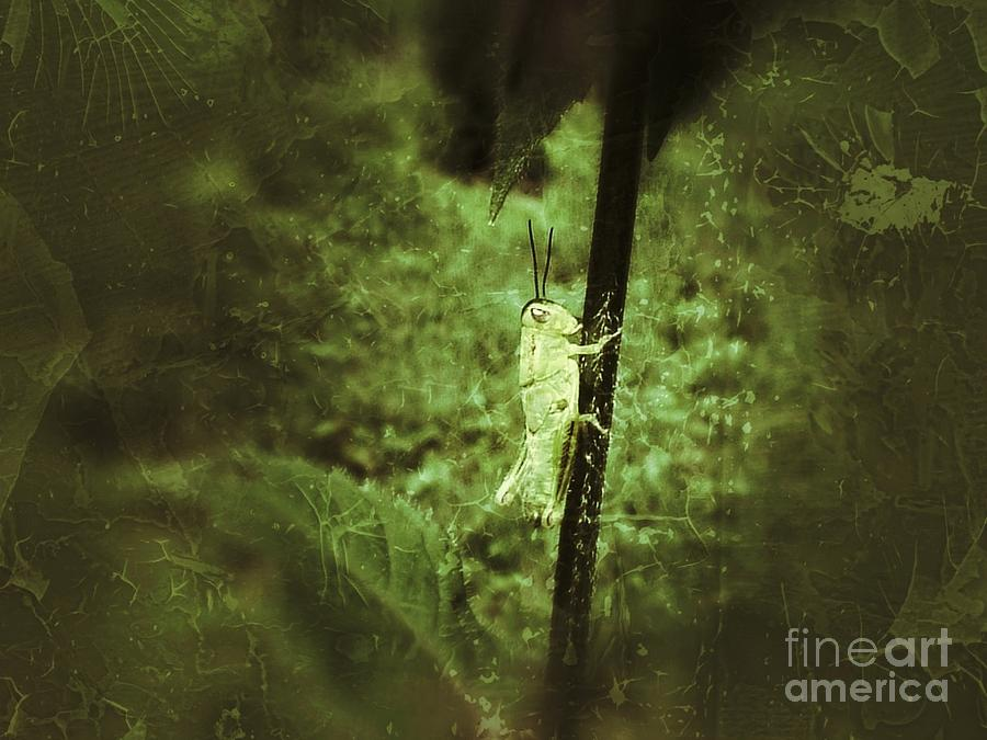 Hanging On Photograph  - Hanging On Fine Art Print