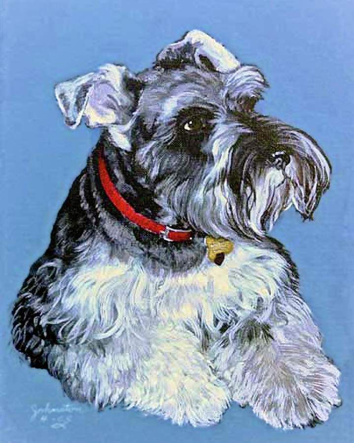 Hans The Schnauzer Portrait Painting  - Hans The Schnauzer Portrait Fine Art Print