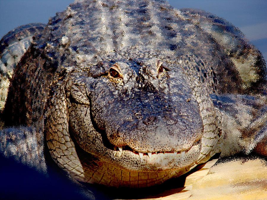 Alligator For Sale