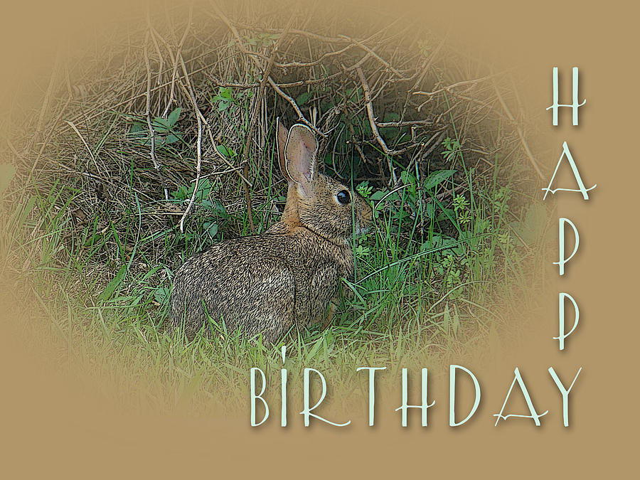 Happy Birthday Wishes Nature ~ Happy birthday greetings cottontail rabbit photograph by mother nature