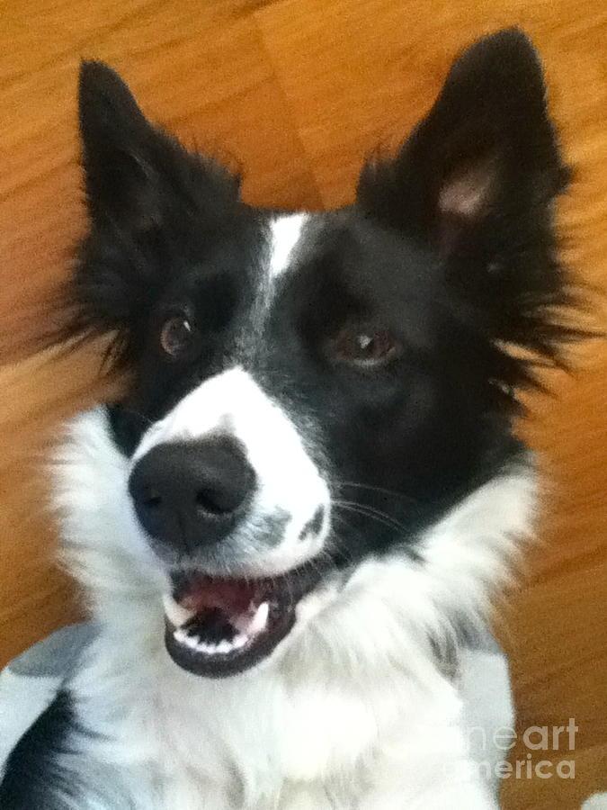 Happy Photograph - Happy Dog by Nicole Bibbens