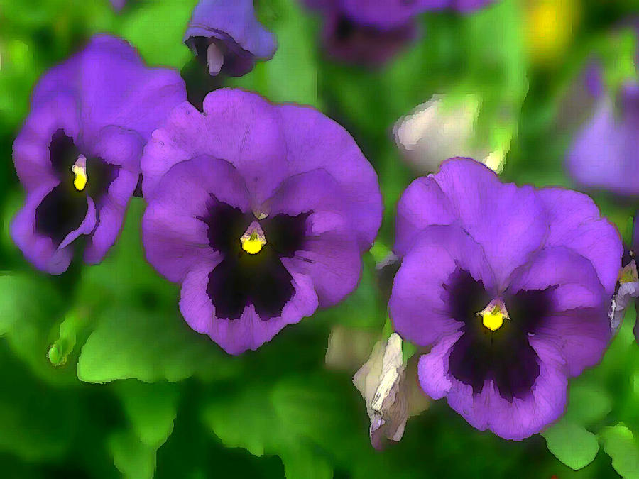 Happy Faces Purple Pansies Painting By Elaine Plesser