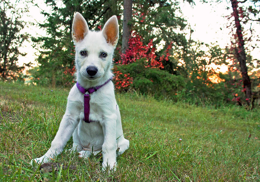 Happy Puppy Photograph