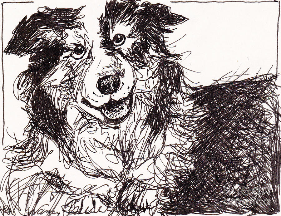 Happy The Boarder Collie Drawing  - Happy The Boarder Collie Fine Art Print