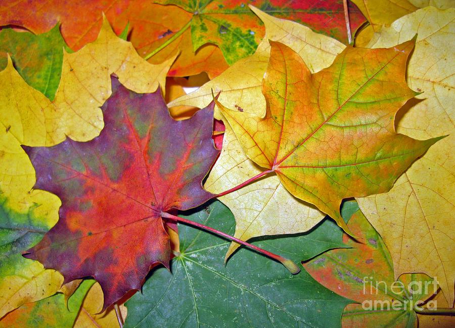 Fall Photograph - Happy We Are Together by Ausra Huntington nee Paulauskaite