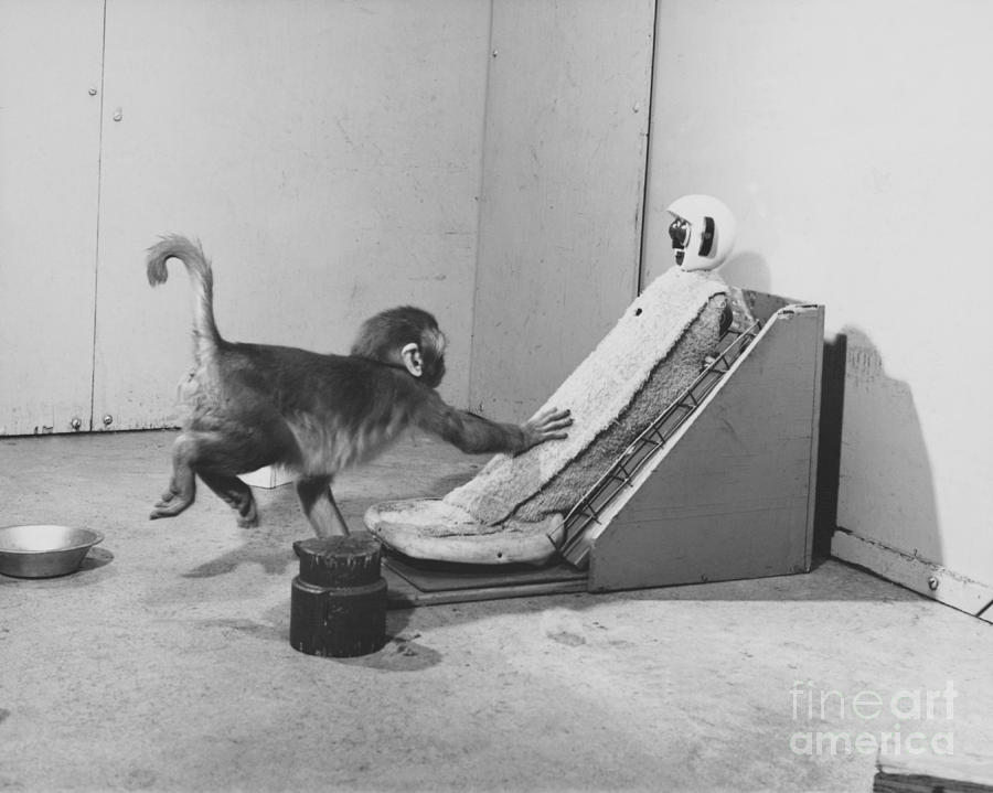 Harlow Monkey Experiment Photograph