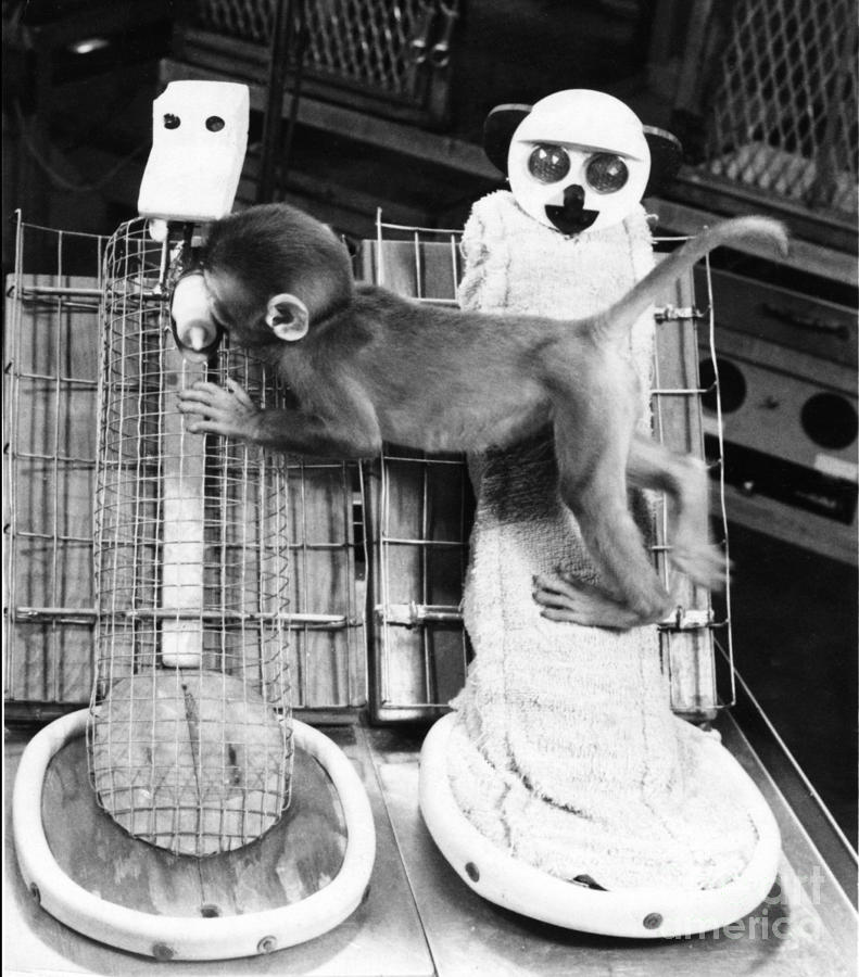 Infant Monkey Photograph - Harlows Monkey Experiment by Photo Researchers, Inc.