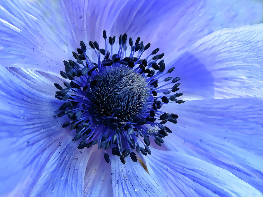 Harmony Blue Photograph