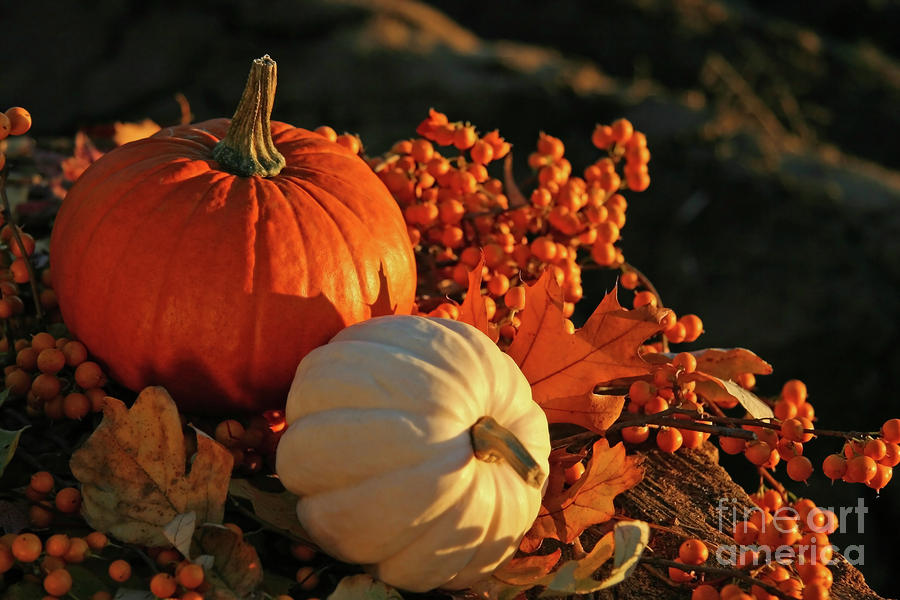 Harvest Colors Photograph  - Harvest Colors Fine Art Print