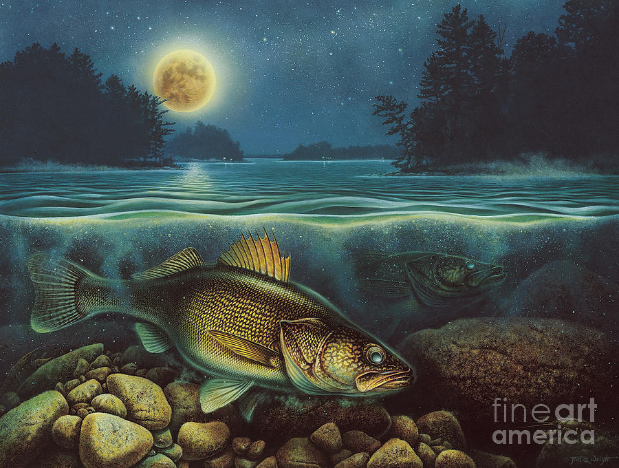 Harvest Moon Walleye IIi Painting  - Harvest Moon Walleye IIi Fine Art Print
