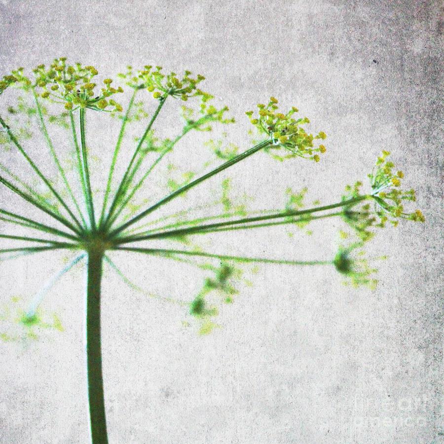 Flower Mixed Media - Harvest Starbust 3 by Linda Woods