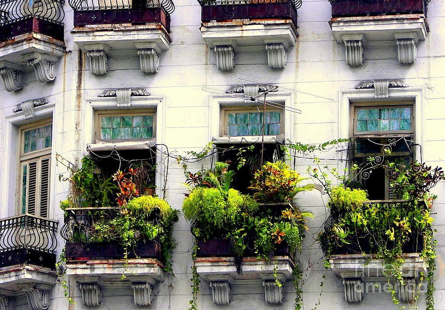 Havana Windows Photograph  - Havana Windows Fine Art Print