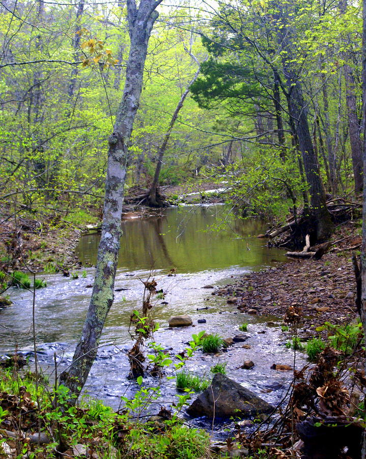 Haw Creek Photograph