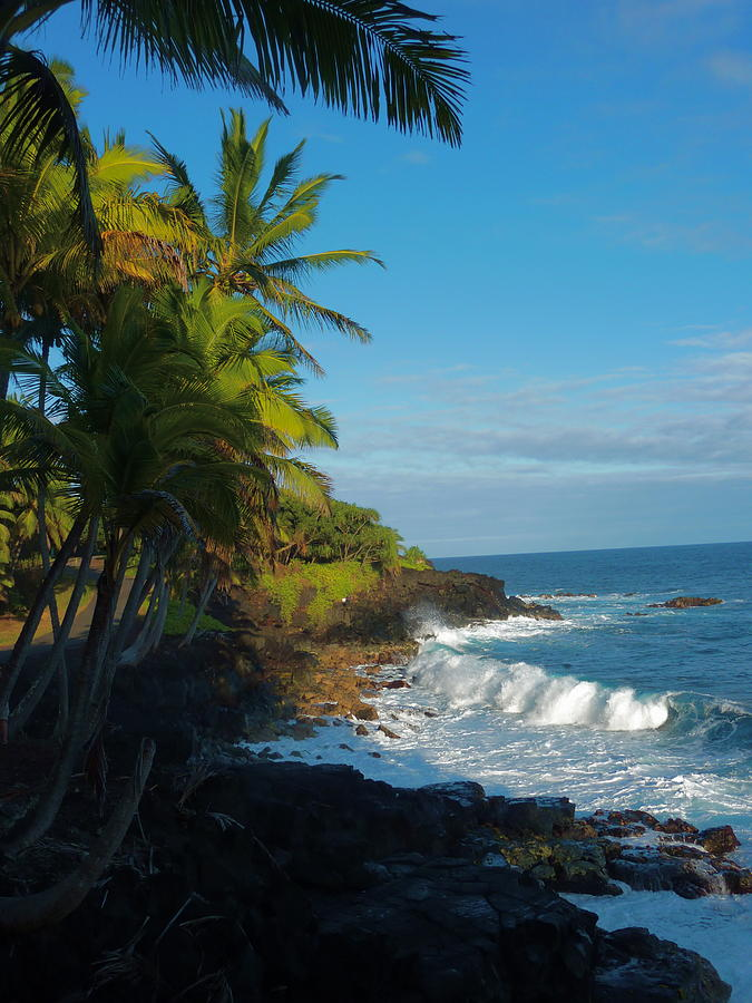 hawaiian paradise island palms - photo #9