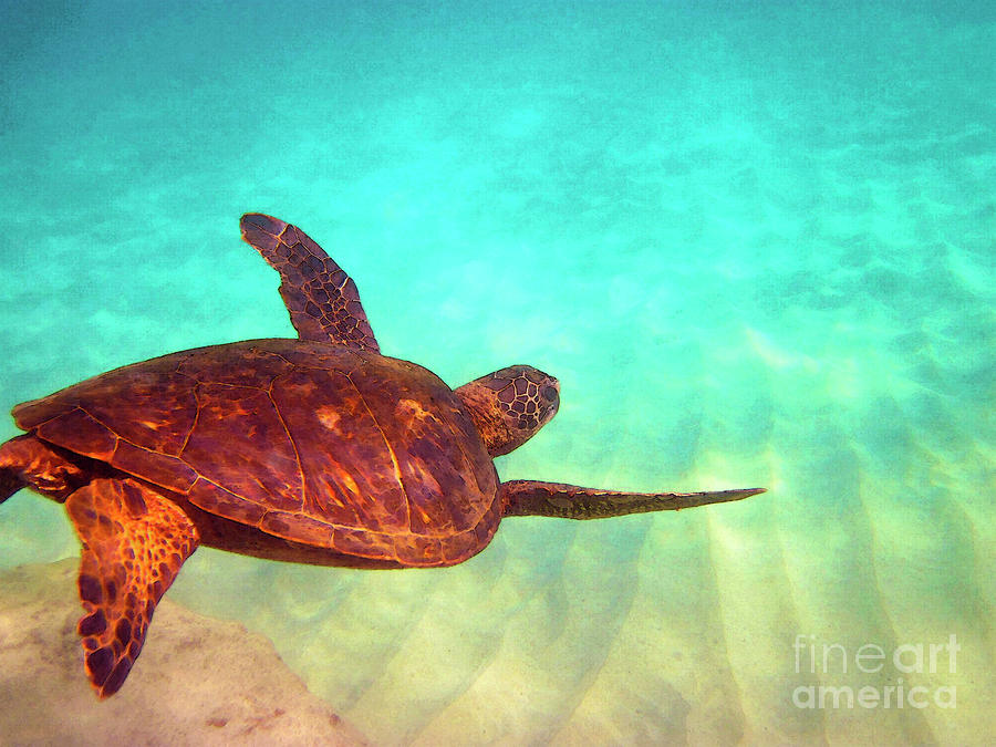 Hawaiian Green Sea Turtle Photograph  - Hawaiian Green Sea Turtle Fine Art Print