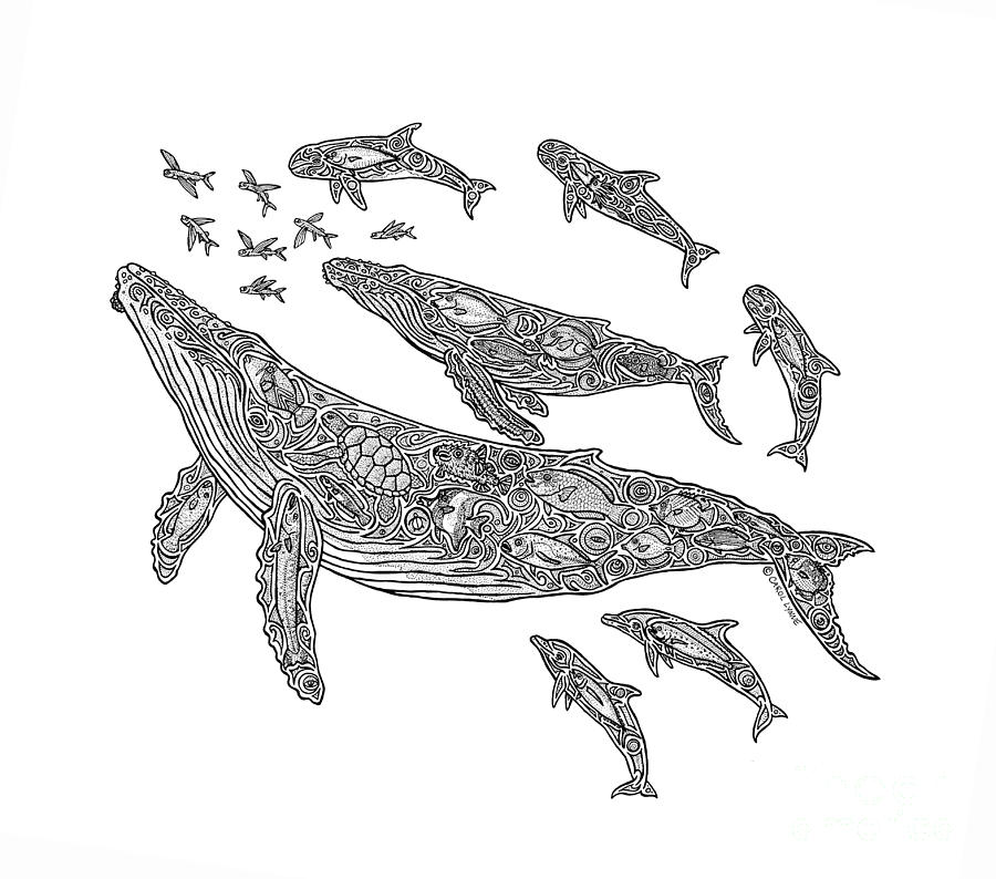 Hawaiian Humpbacks Drawing  - Hawaiian Humpbacks Fine Art Print