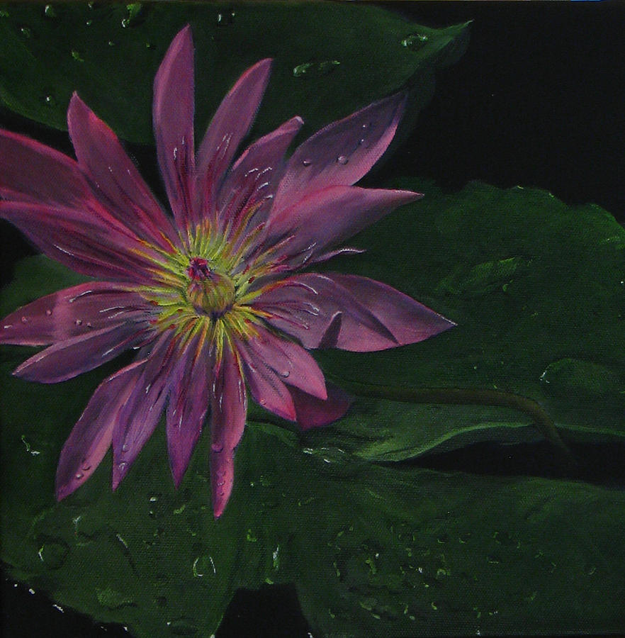 Hawaiian Water Lily - Pink Painting  - Hawaiian Water Lily - Pink Fine Art Print