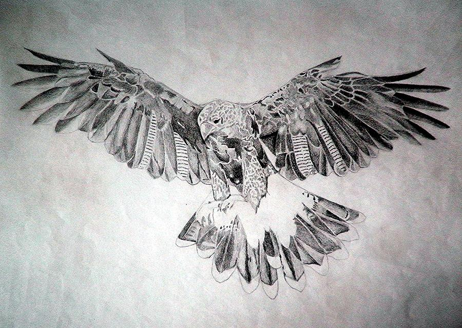 Hawk drawing kids
