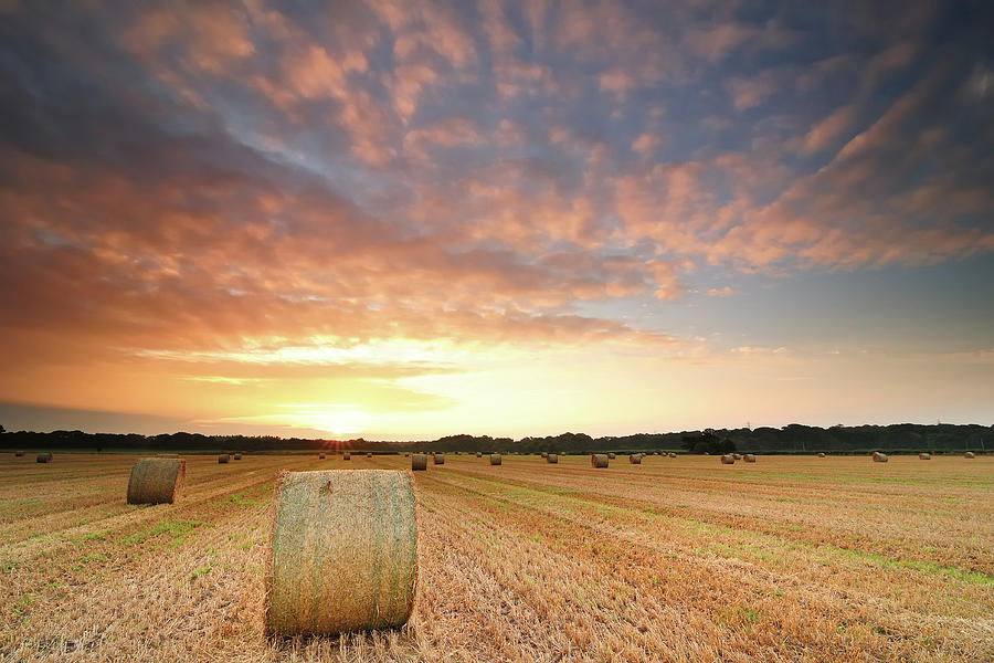 Hay Bale Field At Sunrise Photograph  - Hay Bale Field At Sunrise Fine Art Print