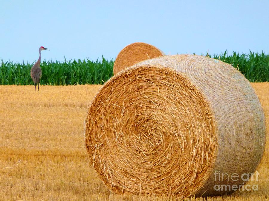 Hay Bale With Crane Photograph