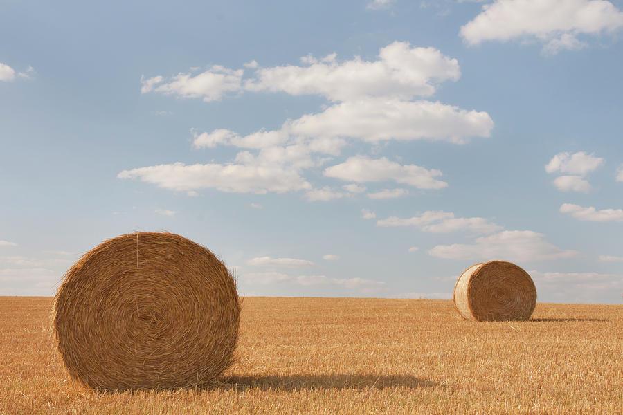 Hay Barrels In Burgundy Region Photograph