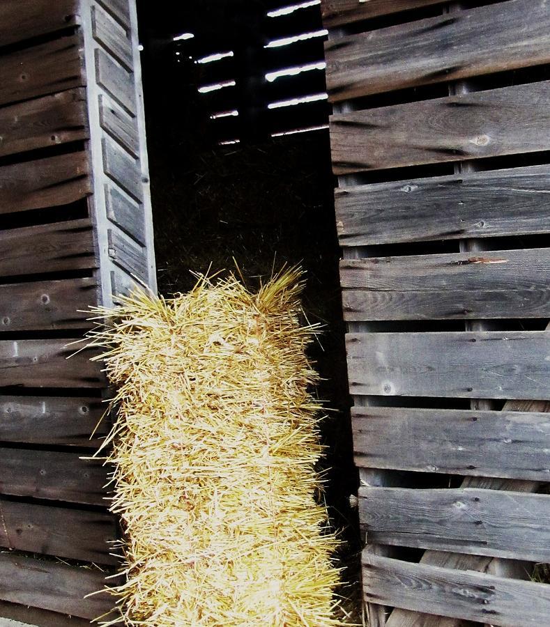 Hay Photograph - Hay-day by Todd Sherlock