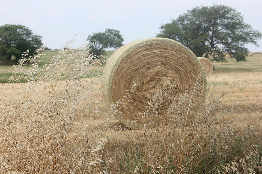 Hay Days In Texas Photograph  - Hay Days In Texas Fine Art Print