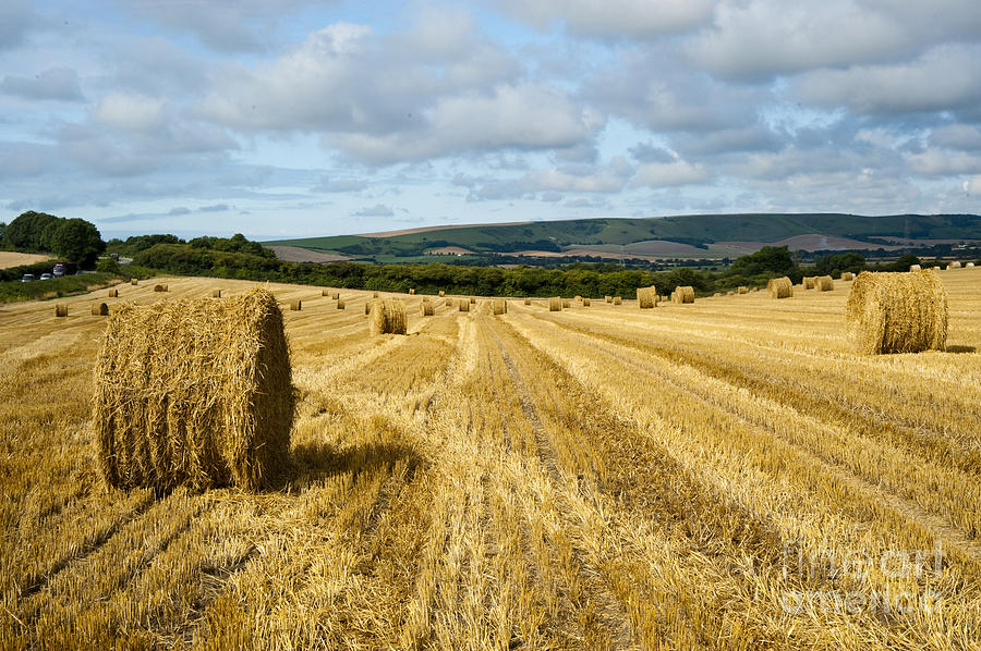 Hay Field Photograph