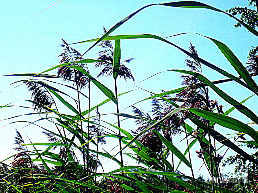 Blue Canvas Prints Photograph - Hay In The Summer by Pauli Hyvonen
