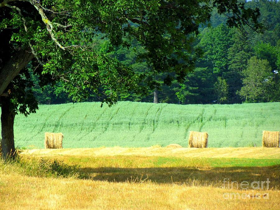 Hay Landscape Glass Art