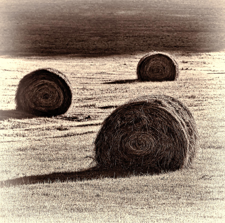 Haybales In The Field Photograph  - Haybales In The Field Fine Art Print