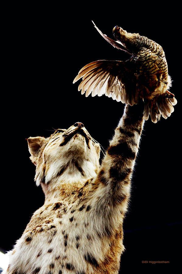Bobcat Photograph - He Got Away by DiDi Higginbotham