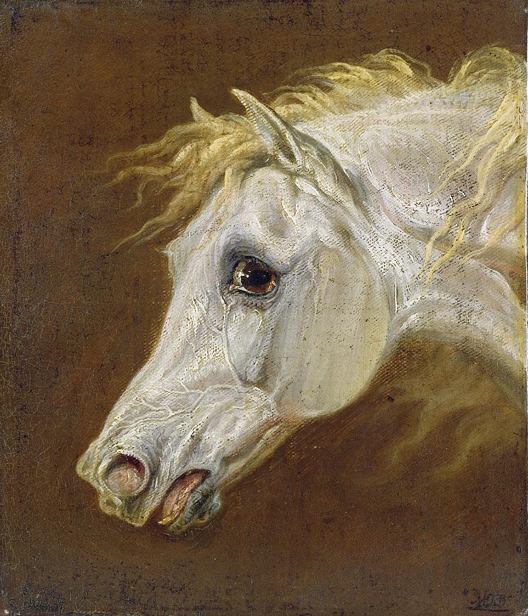 Head Of A Grey Arabian Horse  Painting  - Head Of A Grey Arabian Horse  Fine Art Print