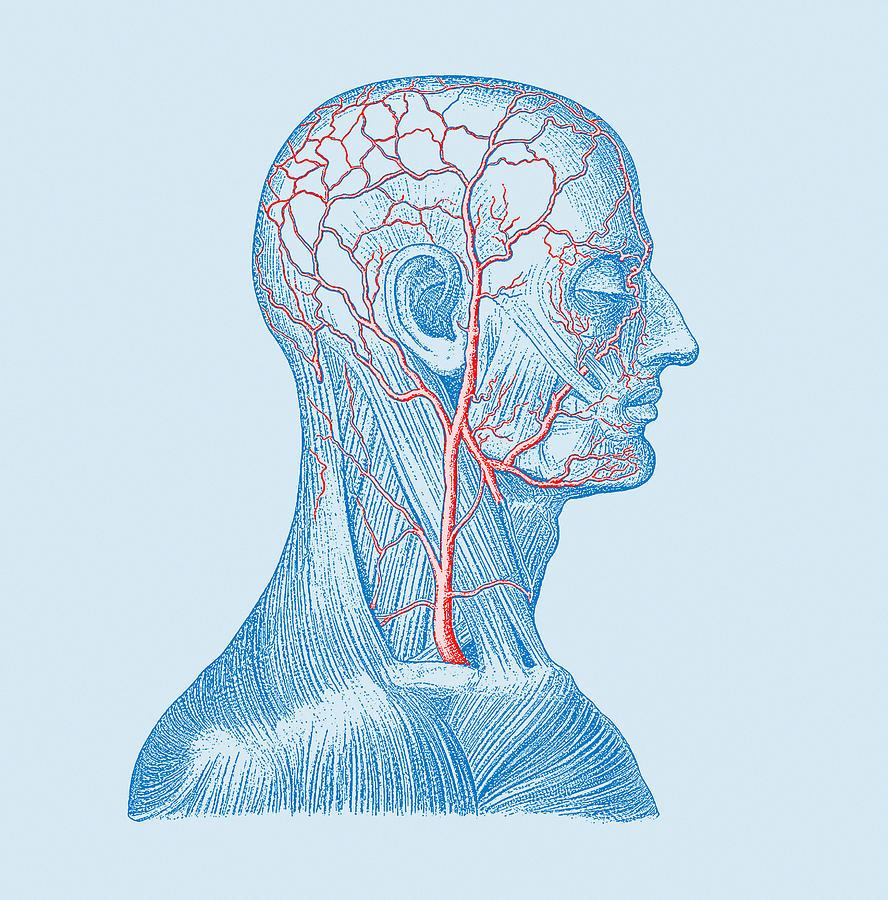 Head Veins Photograph