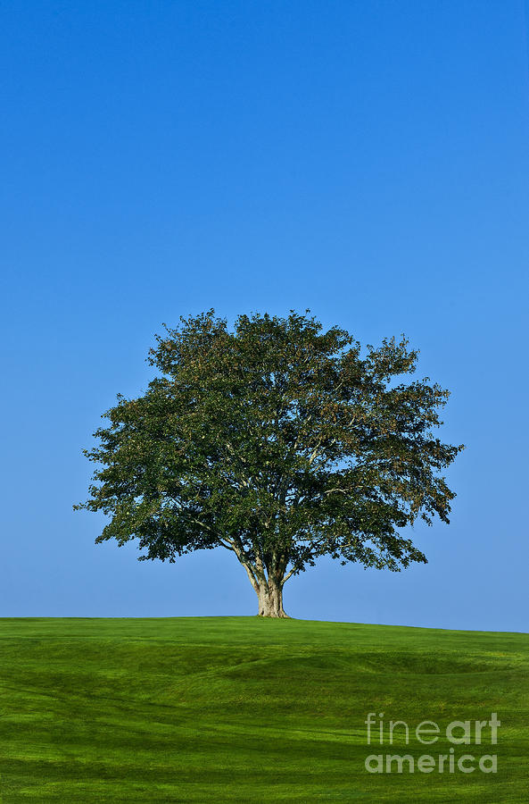 Healthy Tree Photograph