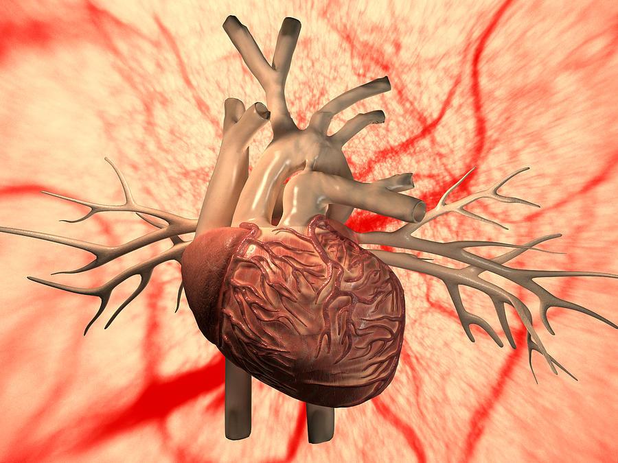 Heart Photograph - Heart, Computer Artwork by Equinox Graphics