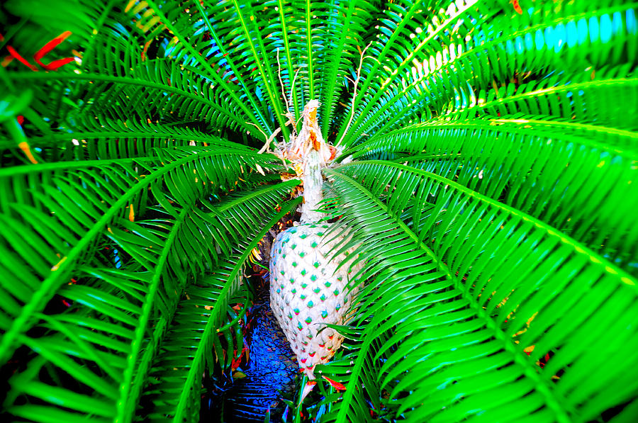 Landscape Palm Leaves Color Photographer Travel Tropical Green Photograph - Heart Of Palm  by Andres LaBrada