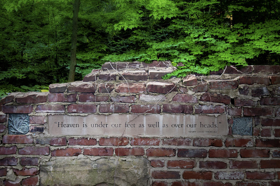 Heaven Under Our Feet Wall Photograph