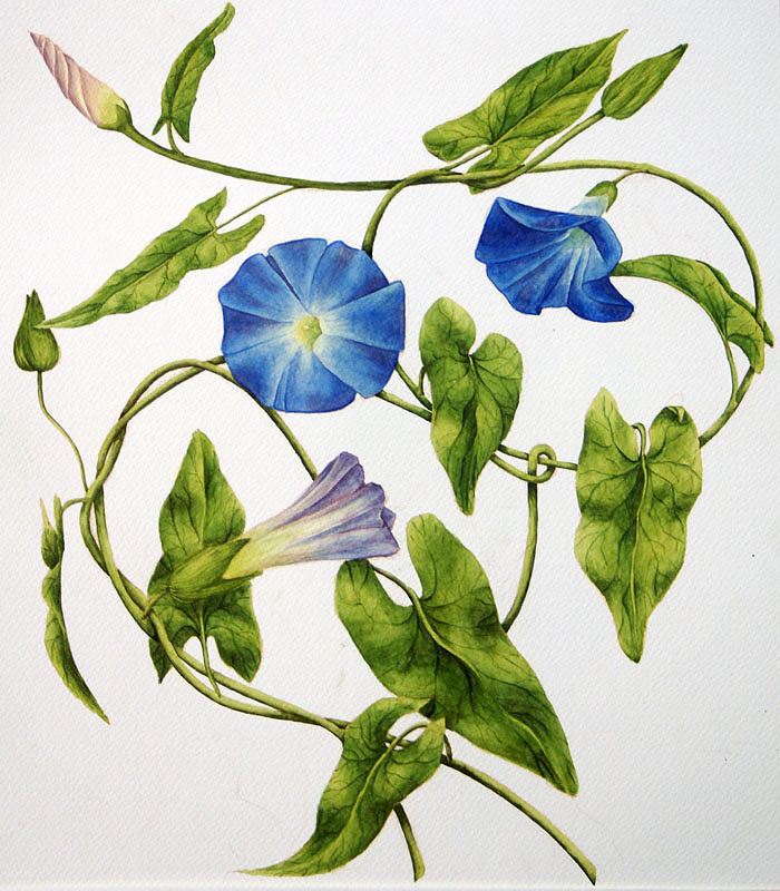 Blue Morning Glories Painting