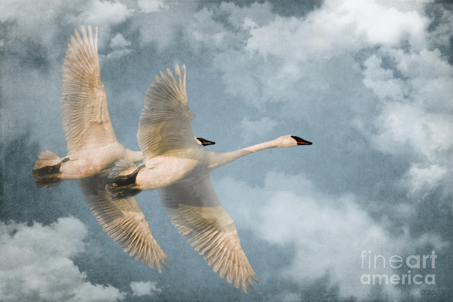 Heavenly Flight Photograph  - Heavenly Flight Fine Art Print