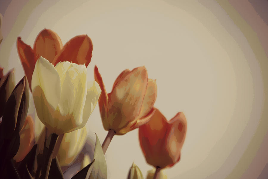 Tulips Photograph - Heavenly Glow by Marilyn Wilson