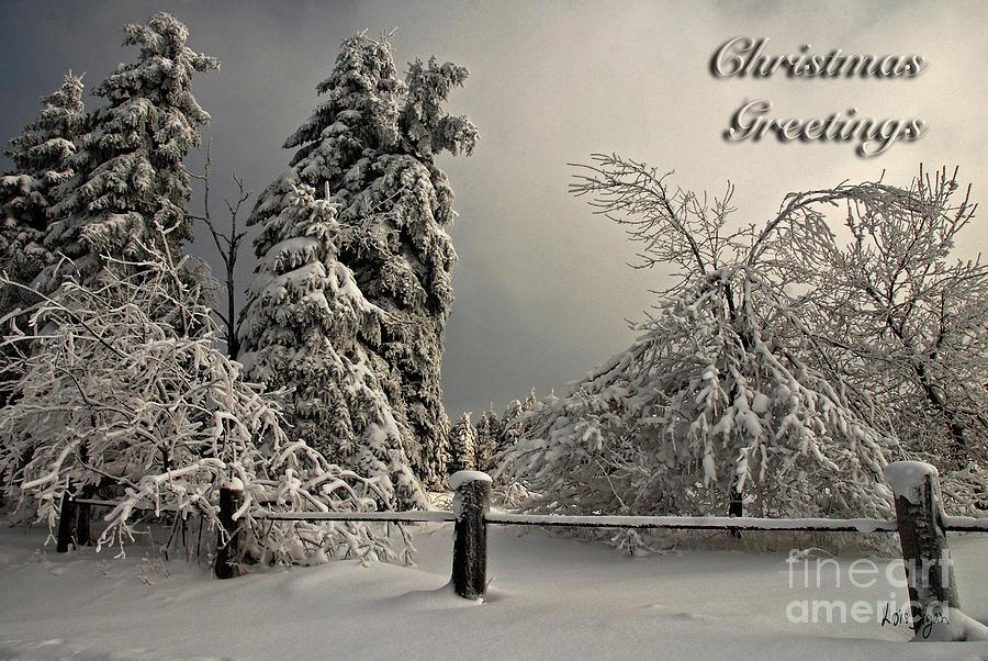 Heavy Laden Christmas Card Photograph