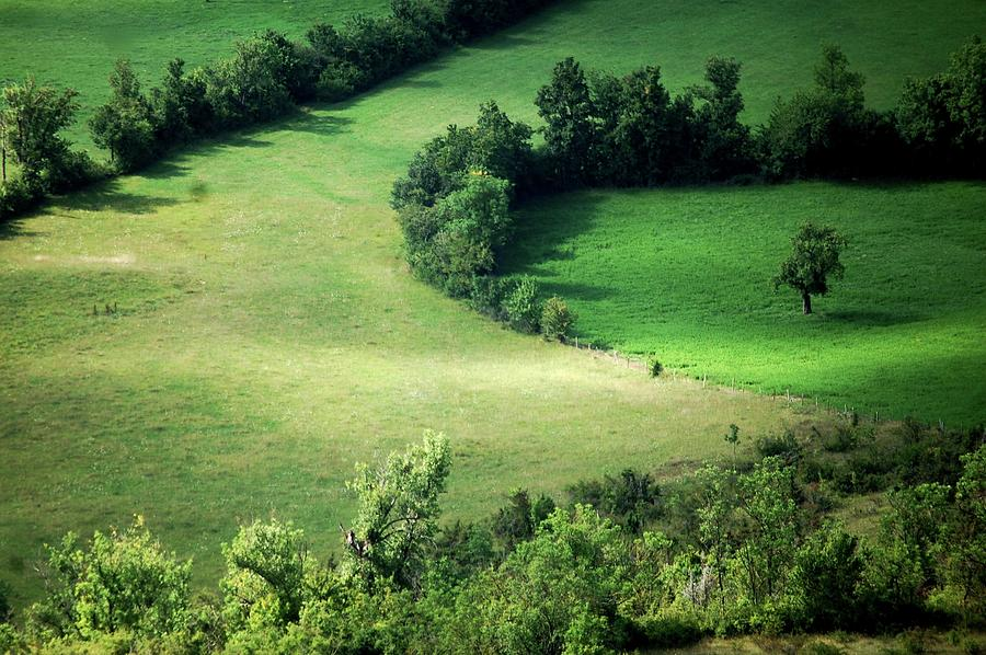 Hedged Farmland Photograph