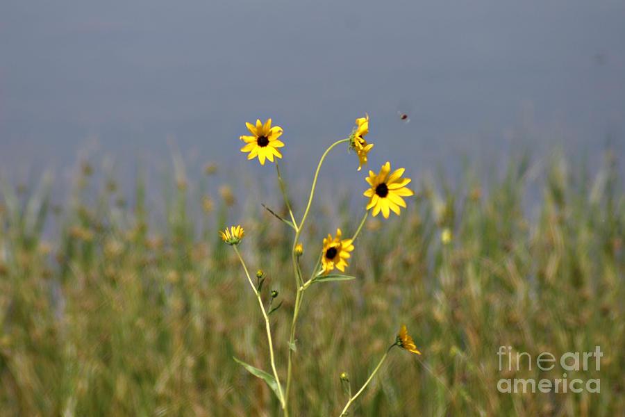 Hello Sunshine Photograph