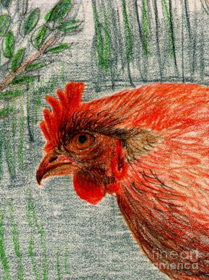 hen Drawing
