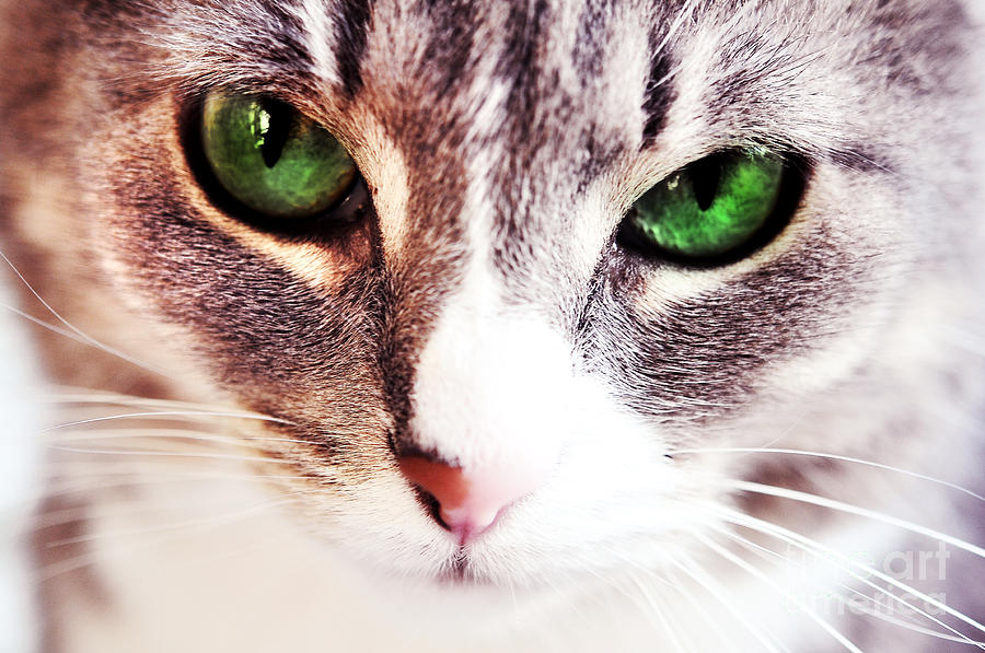 [Image: her-emerald-eyes-kitty-time-jenny-rainbow.jpg]