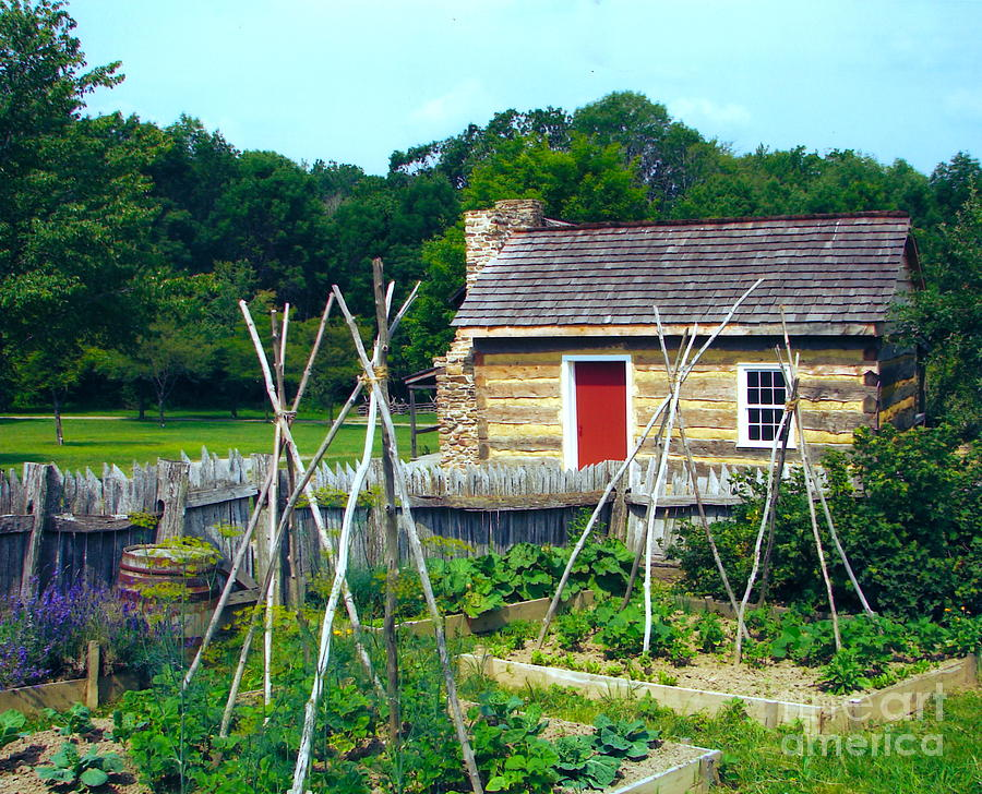 Herb And Vegetable Garden Photograph