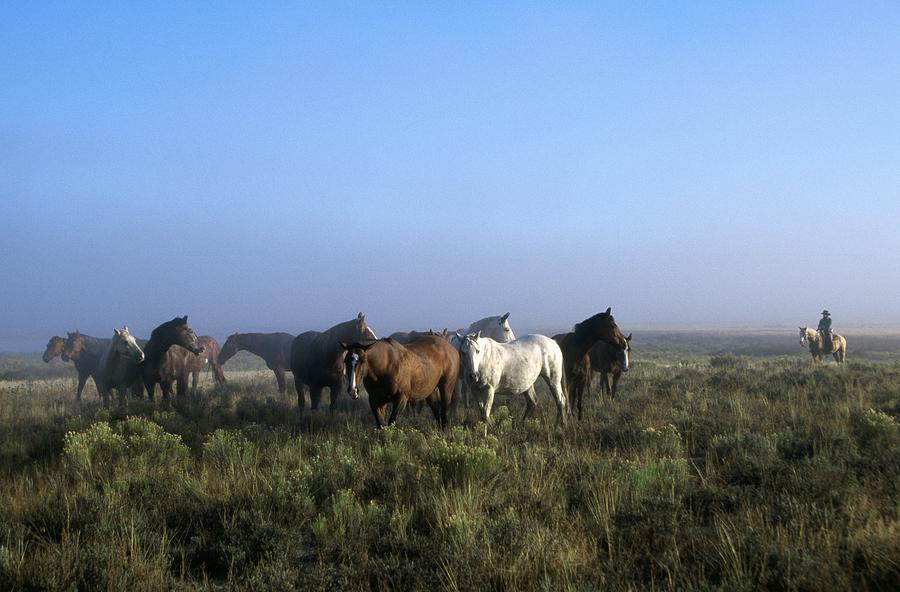 Herd Of Horses And Cowboy On Horseback Photograph  - Herd Of Horses And Cowboy On Horseback Fine Art Print